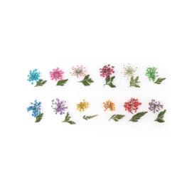 Kuivatatud lillede komplektid, erinevad – Lilled ja lehed