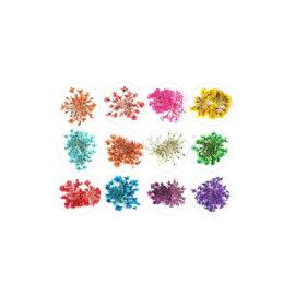 Kuivatatud lillede komplektid, erinevad – Lilled
