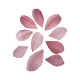 Dekoratiivsuled, lõigatud, 5-6cm, 36tk, roosa