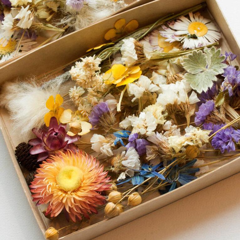 Eesti kuivatatud lilled ja taimed, MIX komplekt