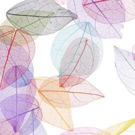 Värvilised lehed